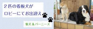 呉市の非喫煙者専用ビジネスホテル・第1パークホテル・看板犬